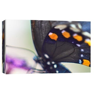 """PTM Images 9-101884  PTM Canvas Collection 8"""" x 10"""" - """"Butterfly Az 10"""" Giclee Butterflies Art Print on Canvas"""