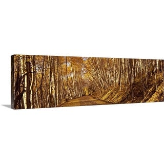 """Road passing through a forest, Colorado,"" Canvas Wall Art"