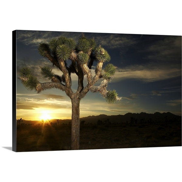 """Joshua Tree at Sunset"" Canvas Wall Art"