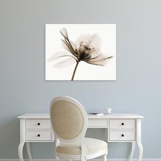 Easy Art Prints Robert Coop's 'Hellebore II' Premium Canvas Art