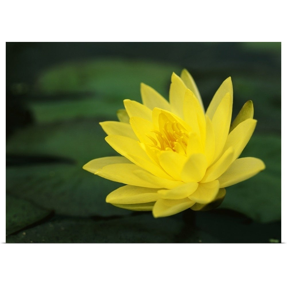 Shop Yellow Lotus Multi Color Free Shipping On Orders Over 45