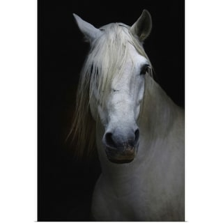 """""""White horse in shadow"""" Poster Print"""