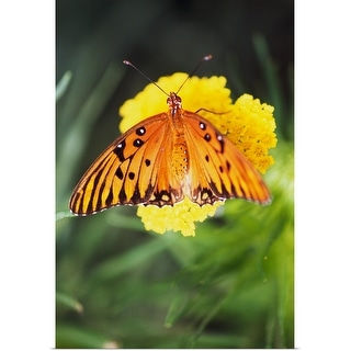 """""""Butterfly On Blooming Flower"""" Poster Print"""