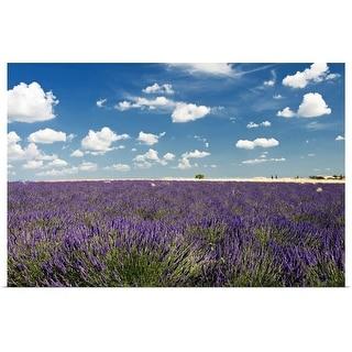 """Lavender field against blue sky."" Poster Print"