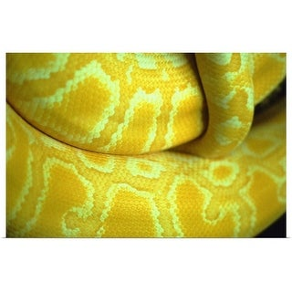 """Close up of yellow snake"" Poster Print"
