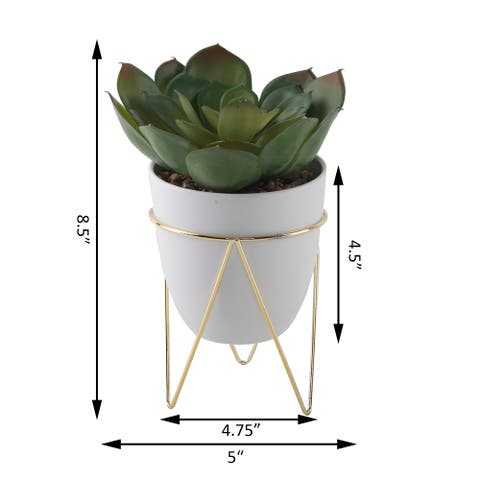 """SUCC in 4.75"""" WH Pot in GD Metal Stand"""