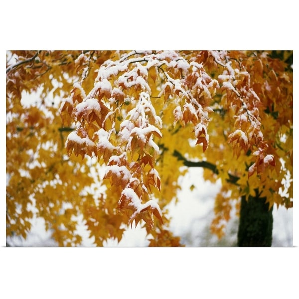 """""""Snow on autumn color leaves, Oregon, united states, """" Poster Print"""