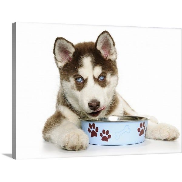 """""""Puppy Husky eating from the bowl"""" Canvas Wall Art"""