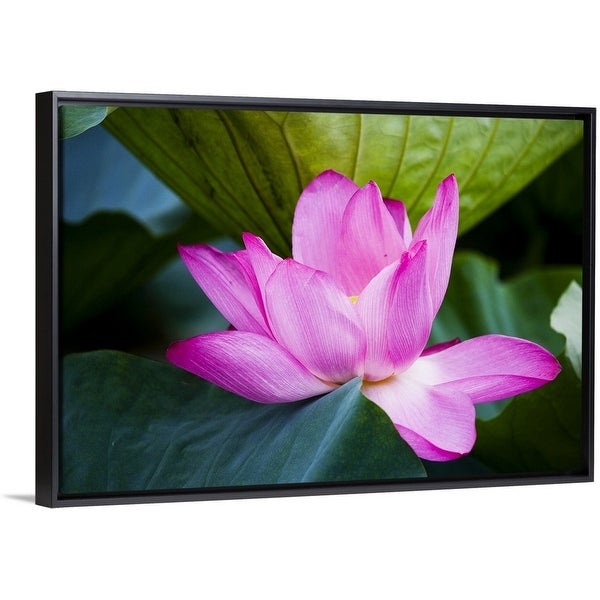 Lotus Flower Picture Frames Flowers Healthy