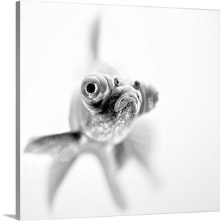 Paul Photography Premium Thick-Wrap Canvas entitled I'm ready for my close up