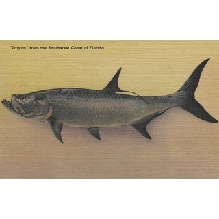 Tarpon Fish from SW Coast of Florida - Vintage Halftone (100% Cotton Towel Absorbent)