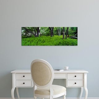 Easy Art Prints Panoramic Images's 'Trees in a forest, North Carolina, USA' Premium Canvas Art