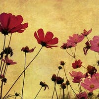 ''Country Poppies'' by Anon Fairfield Art Publishing Art Print (12 x 12 in.)