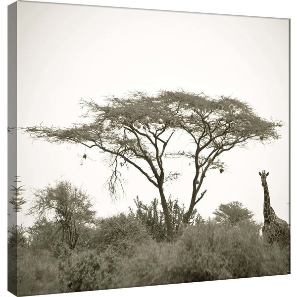 """PTM Images 9-101272 PTM Canvas Collection 12"""" x 12"""" - """"Standing Giraffe"""" Giclee Giraffes Art Print on Canvas"""