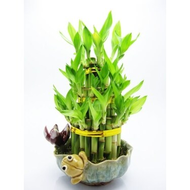 9GreenBox - Lucky 'Bamboo' - Frog and Lotus