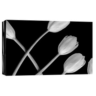 """PTM Images 9-101885  PTM Canvas Collection 8"""" x 10"""" - """"Tulip in the Darkness"""" Giclee Tulips Art Print on Canvas"""