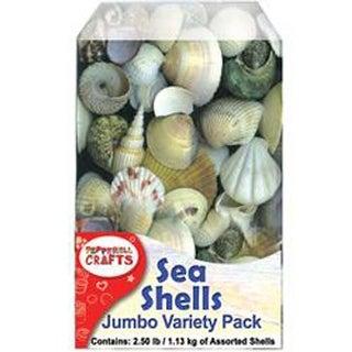 Assorted-Mixed Sea Shells 2.5Lb Container