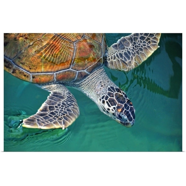 """Close up of a sea turtle, Tanjung Pinang kelong."" Poster Print"