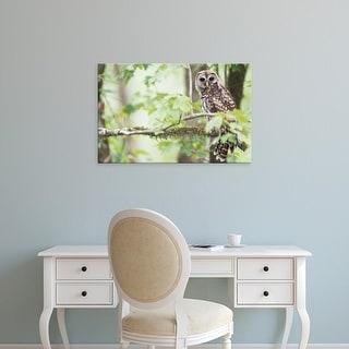 Easy Art Prints Rob Tilley's 'Barred Owl' Premium Canvas Art