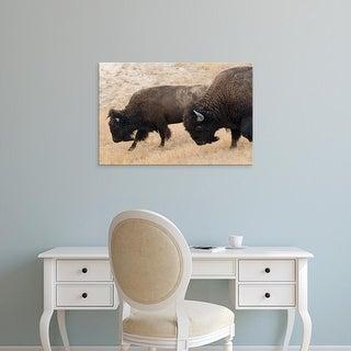 Easy Art Prints Chuck Haney's 'National Bison Range In Montana' Premium Canvas Art