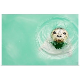 """""""Portrait of a seal in water"""" Poster Print"""