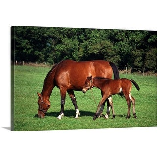 """mare with foal"" Canvas Wall Art"
