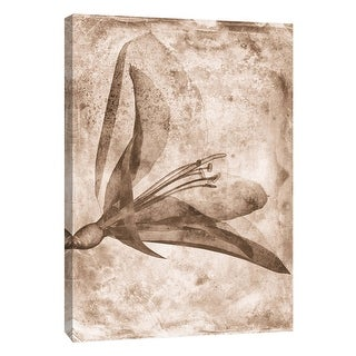 "PTM Images 9-105793  PTM Canvas Collection 10"" x 8"" - ""Sepia Flower Inversions 2"" Giclee Flowers Art Print on Canvas"