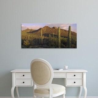 Easy Art Prints Panoramic Images's 'Saguaro Cactus in a desert, Saguaro National Park, New Mexico, Arizona' Canvas Art
