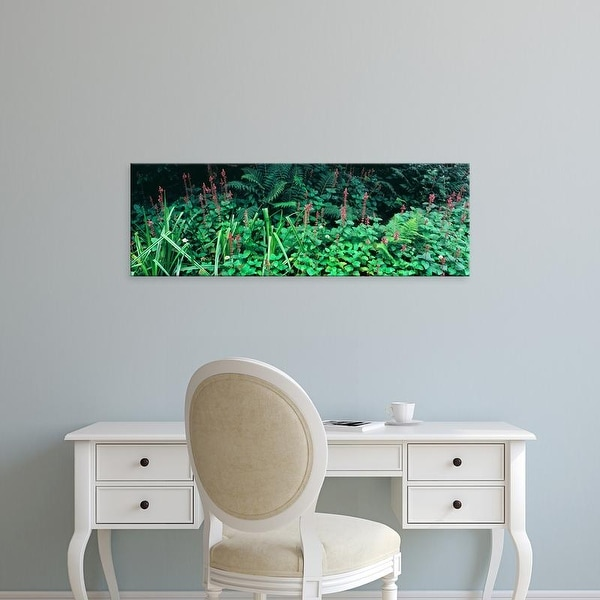 Easy Art Prints Panoramic Image 'Plants, Point Reyes National Seashore, Point Reyes, Marin, California' Canvas Art