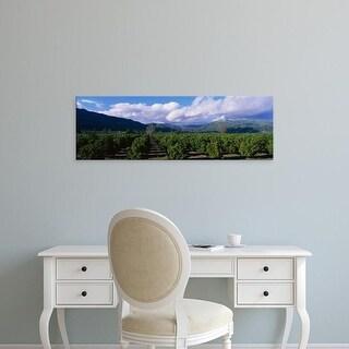 Easy Art Prints Panoramic Images's 'Orange Orchard Fillmore CA' Premium Canvas Art
