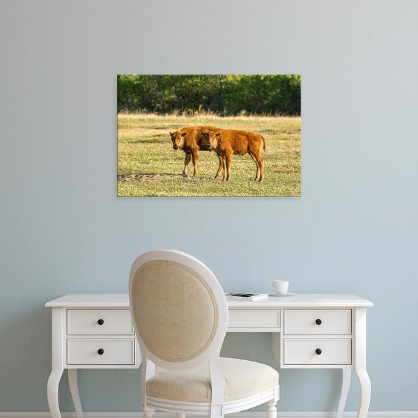 Easy Art Prints Chuck Haney's 'Bison Calves At Play' Premium Canvas Art