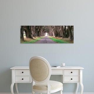 Easy Art Prints Panoramic Image 'Monterey Cypress trees, Point Reyes National Seashore, California' Canvas Art