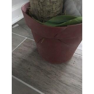 Corn Stalk Dranaena Silk Plant (Real Touch)