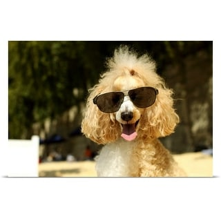 Poster Print entitled Poodle wearing sunglasses at the beach