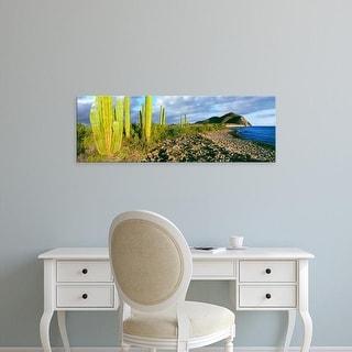 Easy Art Prints Panoramic Image 'Cardon cactus on the coast, Sea of Cortez, Mulege, Baja California, Mexico' Canvas Art