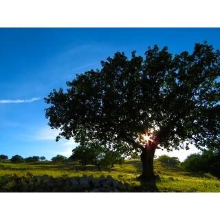 Tree And Blue Sky Photograph Unframed Fine Art Print