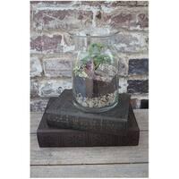 Syndicate Home & Garden 100-06-00 DIY Terrarium Kit, Clear, Glass