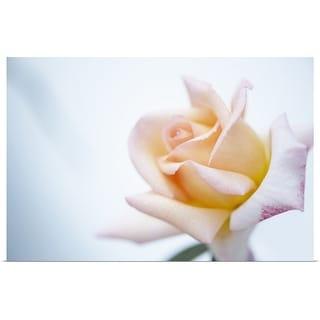 """Rose close up."" Poster Print"