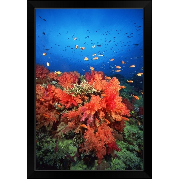 """""""Coral and fish"""" Black Framed Print"""