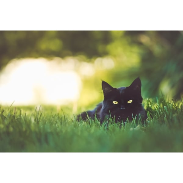 Black And White Cat Photograph Wall Art Canvas - Free Shipping Today ...