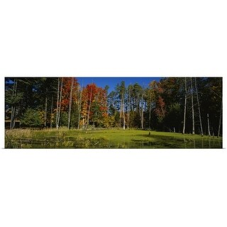 """""""Trees in the forest, Catskill Mountains, New York State"""" Poster Print"""