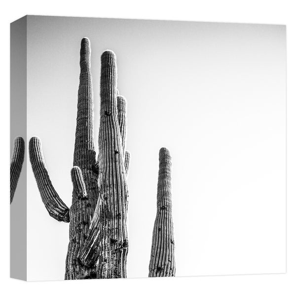 """PTM Images 9-124667 PTM Canvas Collection 12"""" x 12"""" - """"Tall and Lanky 1"""" Giclee Cactuses Art Print on Canvas"""
