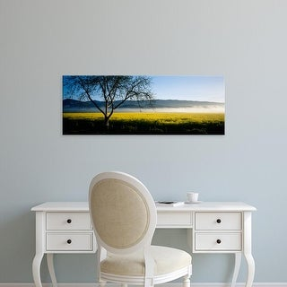Easy Art Prints Panoramic Images's 'Fog over crops in a field, Napa Valley, California, USA' Premium Canvas Art