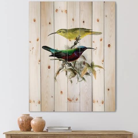 Designart 'Vintage Australian Birds XV' Traditional Print on Natural Pine Wood