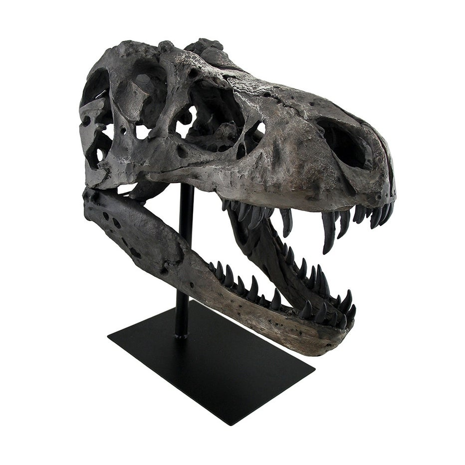 Gray Finished Tyrannosaurus Rex Fossil Skull Statue On Museum Mount T Rex Overstock 16940993
