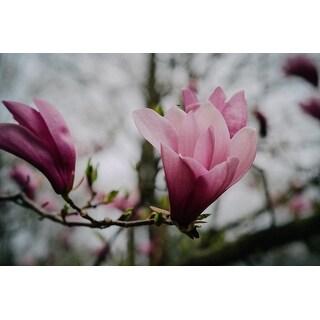Pink Flower On Branch Photograph Unframed Fine Art Print