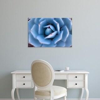 Easy Art Prints Dana Echols's 'Blue Agave' Premium Canvas Art