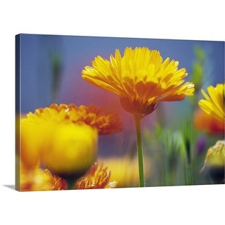 """""""Wildflowers in bloom, soft focus close up, Oregon, united states, """" Canvas Wall Art"""