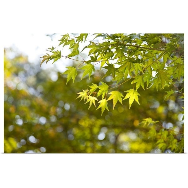 """Maple leaves on a tree in Korea in the National Park"" Poster Print"