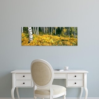 Easy Art Prints Panoramic Image 'Aspen trees in a forest, Phelps Lake, Grand Teton National Park, Wyoming' Canvas Art